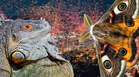 Radar-zilla VS. Audio-mothra