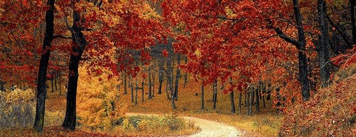 Fly Into Fall